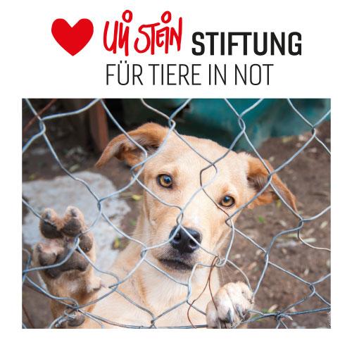 Facebook-Auktion für Tiere in Not